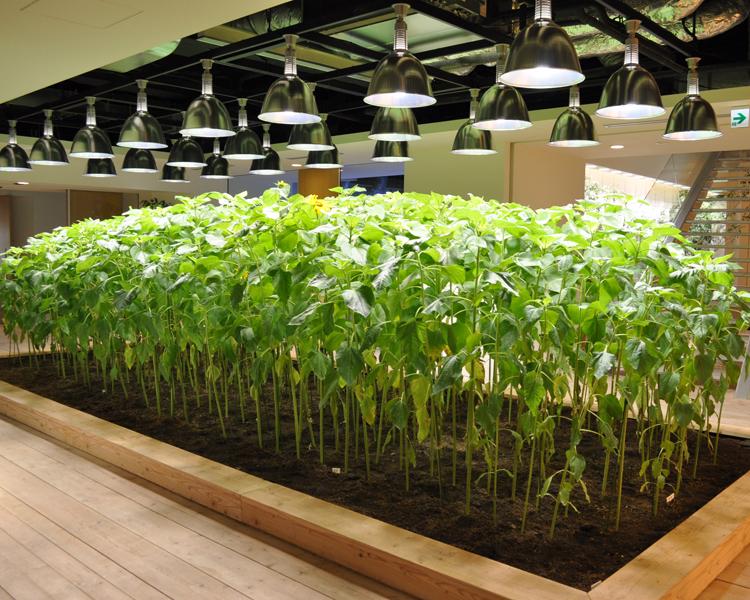 Urban Farm Crops