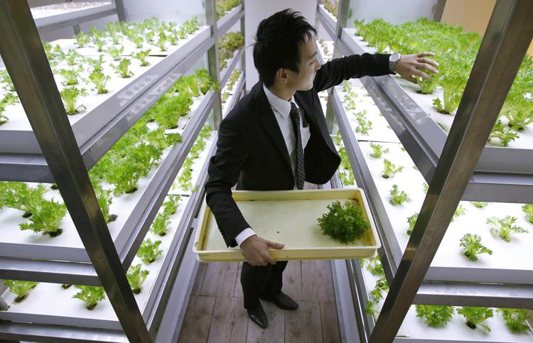 Werknemer oogst groenten